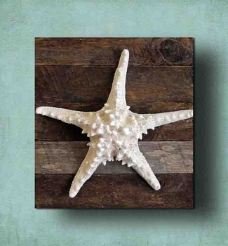 driftwood and shell accents for the home